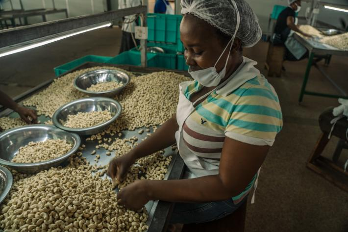 cashew nut factory worker, Ghana