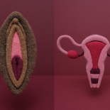 Knitted vulva and uterus